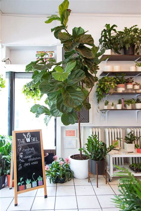 small plants to grow indoors the easiest indoor house plants that won t die on you best