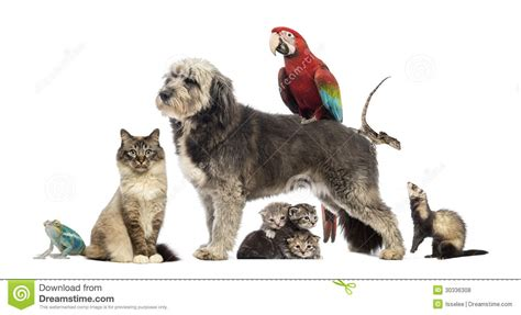 Cat Dreams Of Fish Birds Milk Pet Pet Pet Product by Of Pets Of Pets Cat Bird Reptile