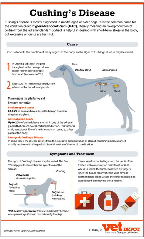 cushings disease dogs an in depth look at cushing s disease in dogs vetdepot