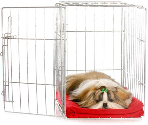 how to a shih tzu to potty the ultimate guide to shih tzu potty