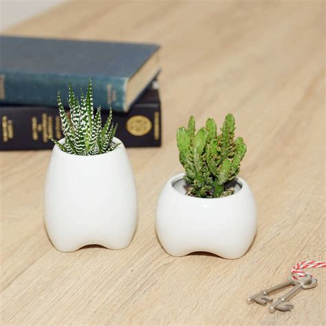 Tooth Shaped Planter | ceramic tooth shaped planter by dingading terrariums