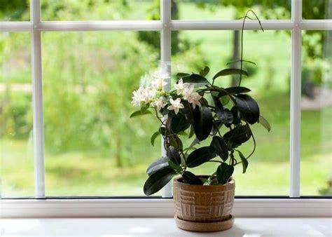 indoor vines  climbers   grow easily
