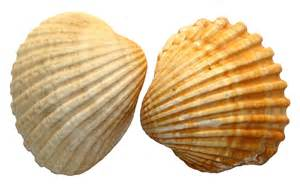 And Shell Shell Png Png Image Cliparts Co