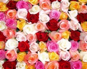 what color of roses розы цветы обои для рабочего стола картинки фото