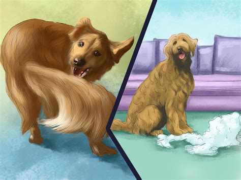 best breed of for me best small breed for me quiz breed dogs spinningpetsyarn