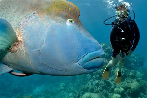 great barrier reef dive trips cairns dive trips