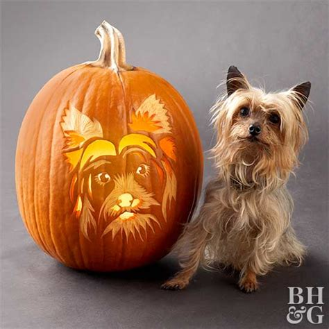 golden retriever pumpkin stencil top pumpkin stencils for the master carver