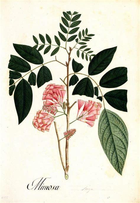 17 best images about plantas on pinterest los gatos 17 mejores ideas sobre dibujos bot 225 nicos en pinterest