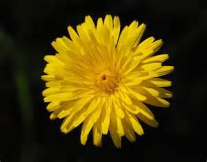 Flower Pic by File Flower February 2008 2 Jpg