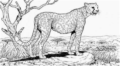 advanced nature coloring pages free coloring pages of nature
