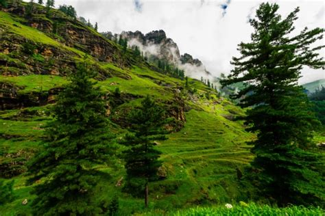 himalayan plants seek cooler climes nature news comment