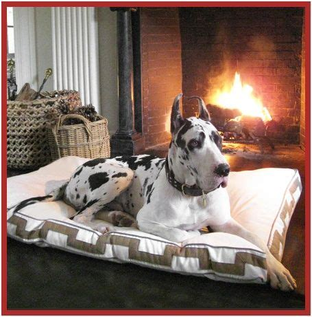 great dane beds great dane bed dog breeds picture