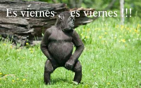 imagenes que digan hoy es viernes imagenes chistosas de micos imagui