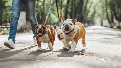 what age to start leash a puppy 9 resources on leash dogs top tips
