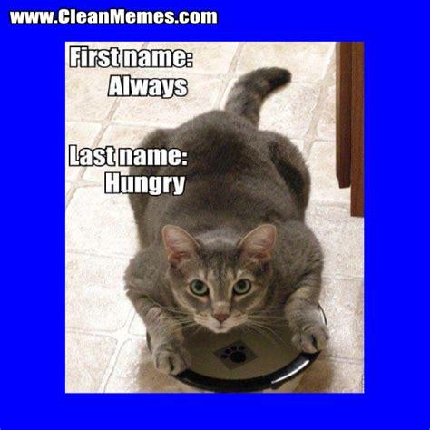 Clean Cat Memes - cat memes clean memes the best the most online page 8