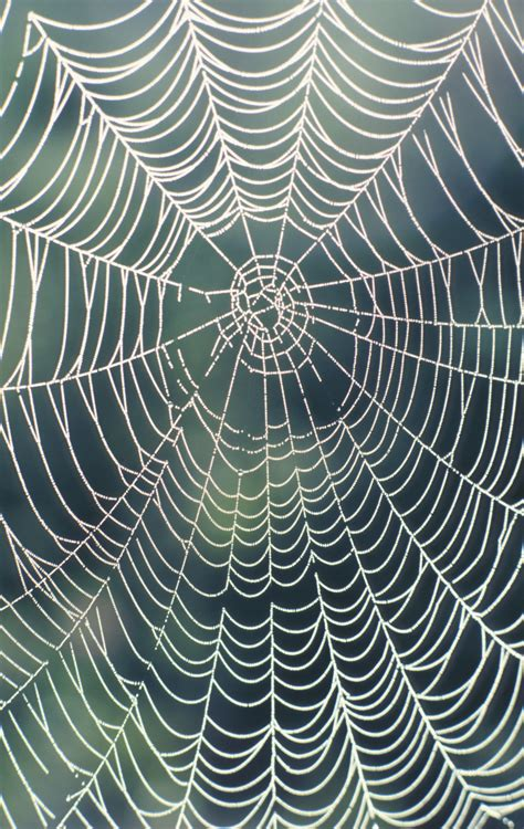 web like pattern how to decorate with fake spider webbing ehow