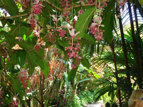 Hawaiian Botanical Gardens Hawaii S Botanical Gardens Mowryjournal