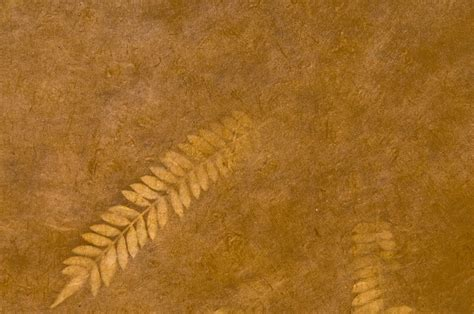 images sand wood texture leaf formation europe