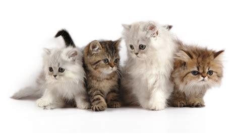imagenes uñas decoradas gatos купить котенка котята в киеве продажа котят котов в