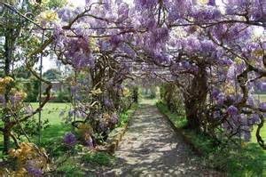 the wisteria tunnel in kawachi gardens japan are a