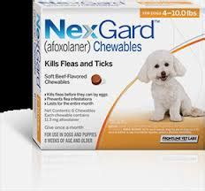 nexgard side effects toxicity archives dr llera kingston ontario veterinarian