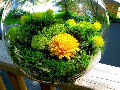 modern round yellow flower globe moss terrarium
