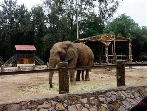 imagenes de leones en zoologico zoologico hotel stadium