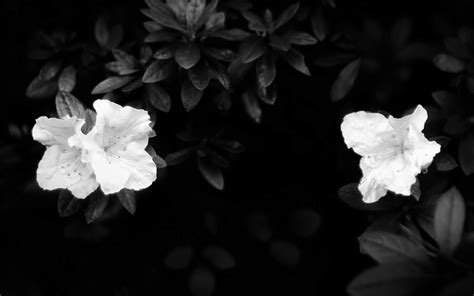 Flower Black black and white wallpapers white flowers on black