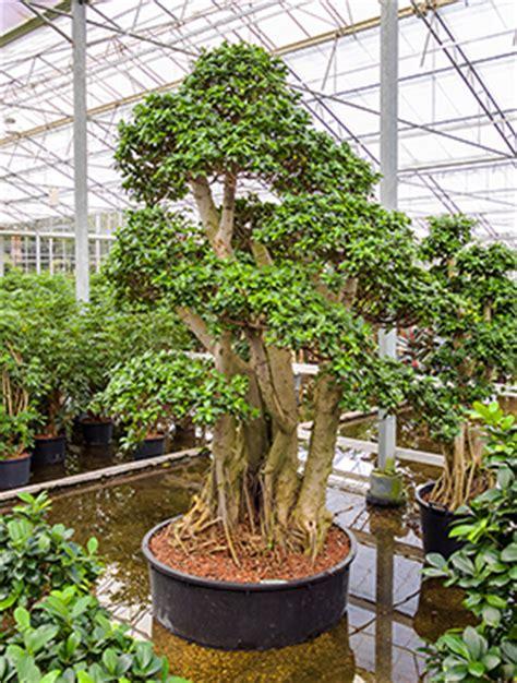 pflanzen kaufen pflanzen kaufen produkttest 2bloom pflanzen kaufen