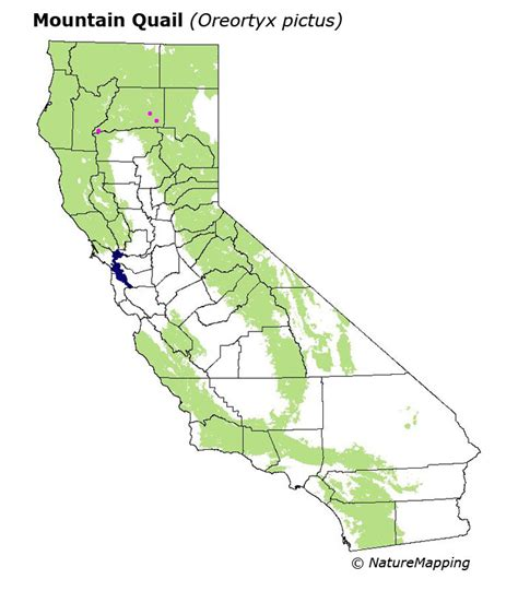 california quail map california distribution map mountain quail oreortyx pictus
