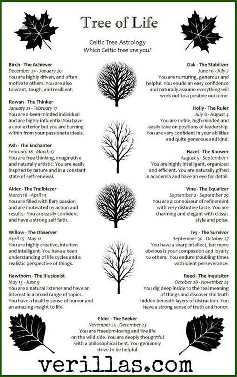 trees and their meanings birthdays celtic tree horoscope birfdays pinterest