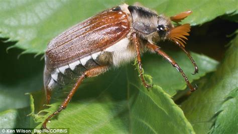 garden pests uk no garden is safe the bugs who are about to wreak havoc
