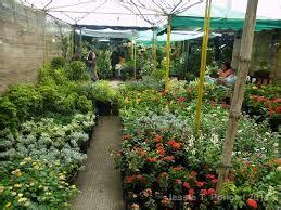 Jual Bibit Anggrek Kompot tanman hias jual beli tanaman bunga hias