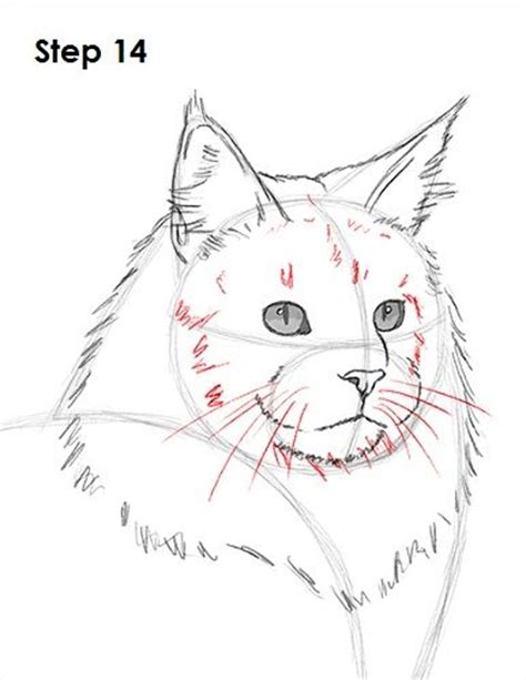 how to a coon 1000 ideas about cat drawing tutorial on drawing tips how to sketch and