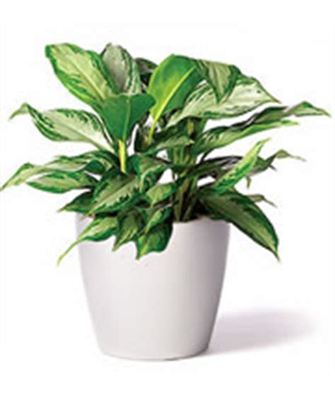 best plant for desk top 10 best plants for your desk at work ambius uk