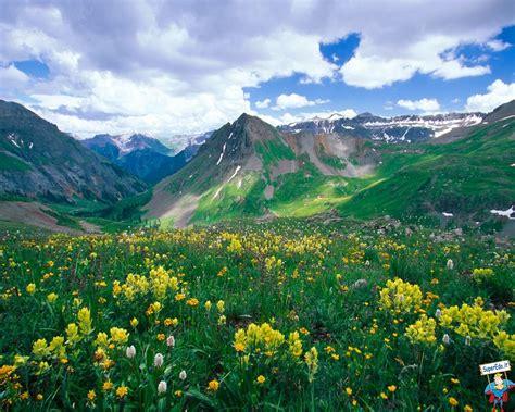 sfondi di fiori sfondi prati di fiori 81 sfondi in alta definizione hd