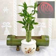 gardening landscaping indoor plants maintenance dubai