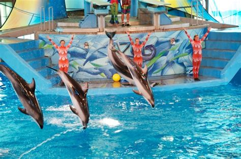 Blind River On Sea World S Special Needs Discount Program Is Epic Here S