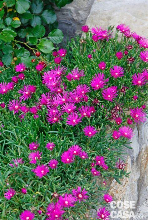 il colore dei fiori d estate fiori d estate per il giardino cose di casa
