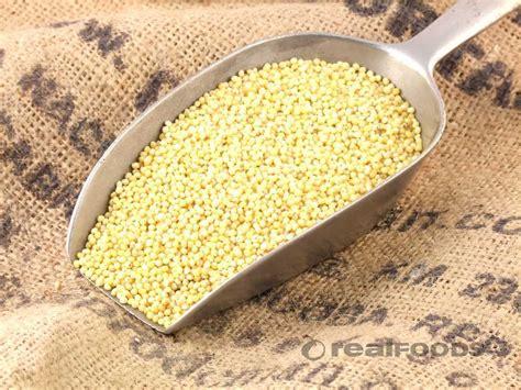 millet protein rich versatile and gluten free croptech