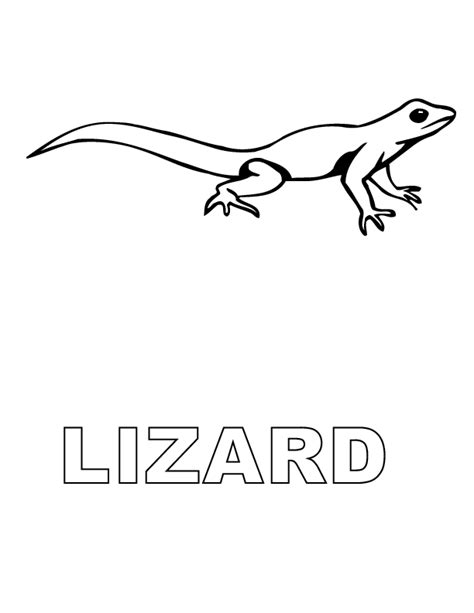 coloring page lizard free printable lizard coloring pages for