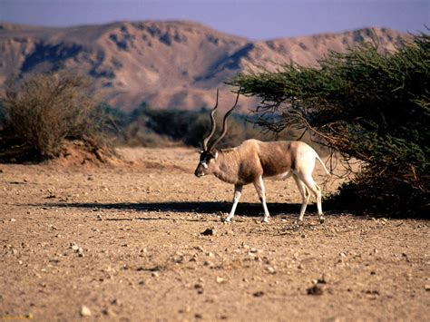 igbo names for animals west africa animal 10 endangered animals in africa smashing tops