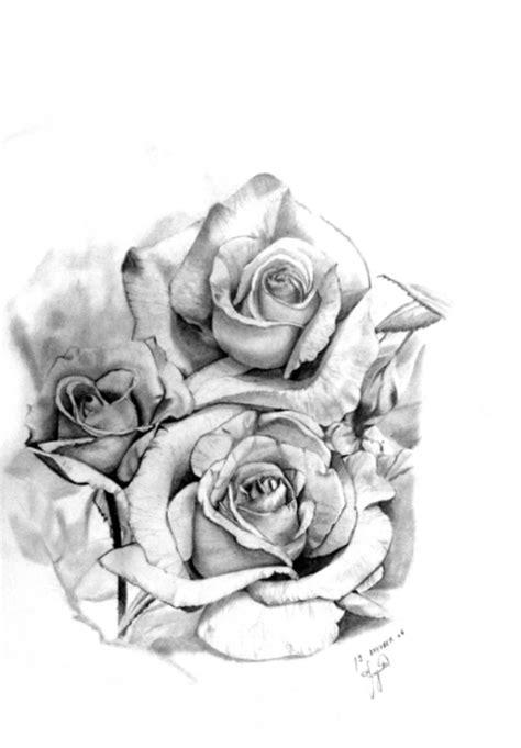 bild pflanzen stillleben rose zeichnung von bojana bei