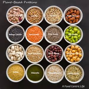 Protein series part 2 why excessive protein is bad for you and the