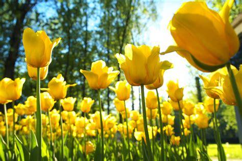 spring start spring equinox first day of spring national awareness days events calendar 2018 2019