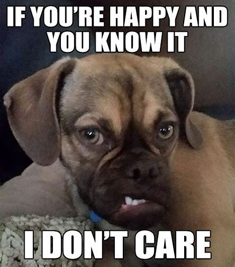 Grumpy Face Meme - photos having a bad day grumpy earl s puppy face will make you feel much better