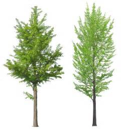 tree image tree png images pictures free