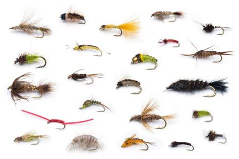 difference  wet  dry flies fly