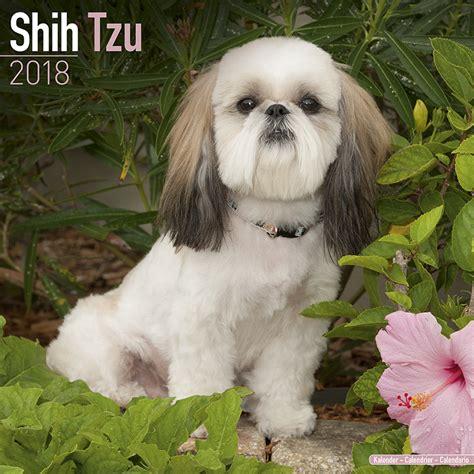 shih tzu toronto shih tzu calendars 2018 on abposters