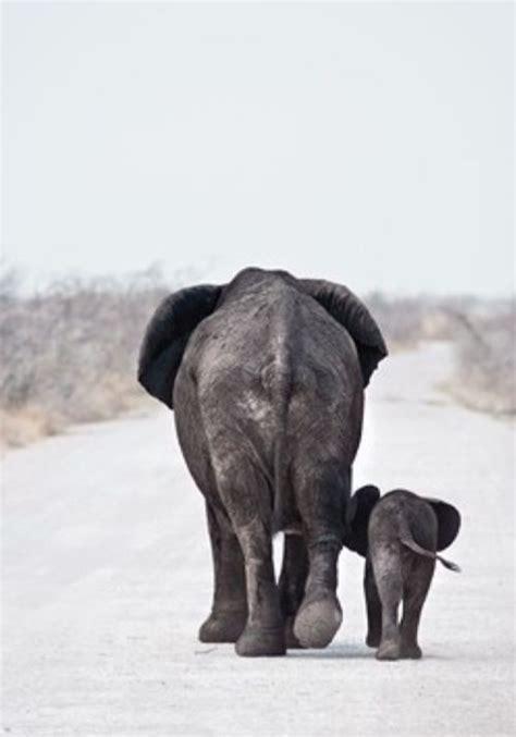 Jomblo Youll Never Walk Alone elephants nelephants beautiful the road